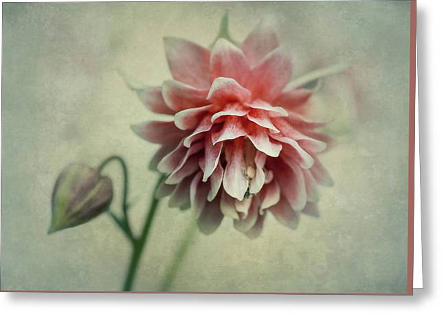 Red And Pink Columbine Greeting Card