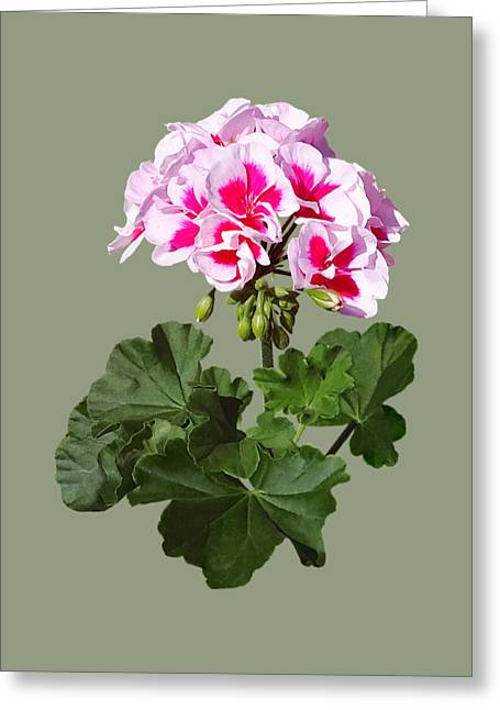 Red And Pink Geranium Greeting Card by Susan Savad