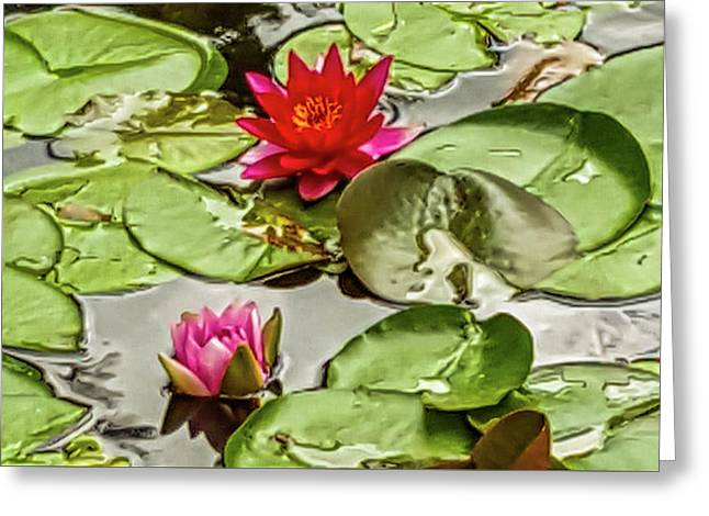 Red And Pink Water Lilly Greeting Card by Art Spectrum