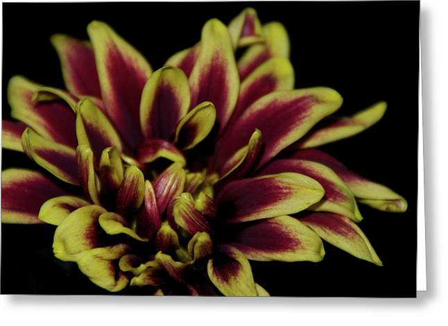 Red And Yellow 2 Greeting Card by Sheryl Thomas