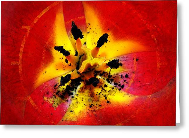 Red And Yellow Flower Greeting Card by Judi Saunders