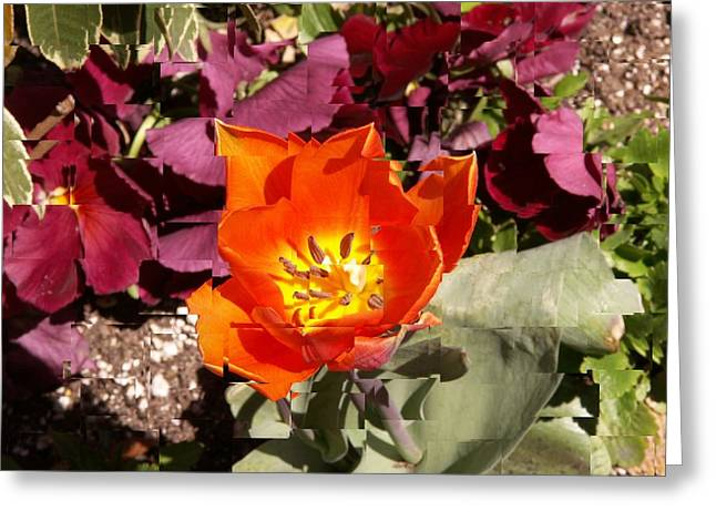 Red And Yellow Flower Greeting Card by Tim Allen