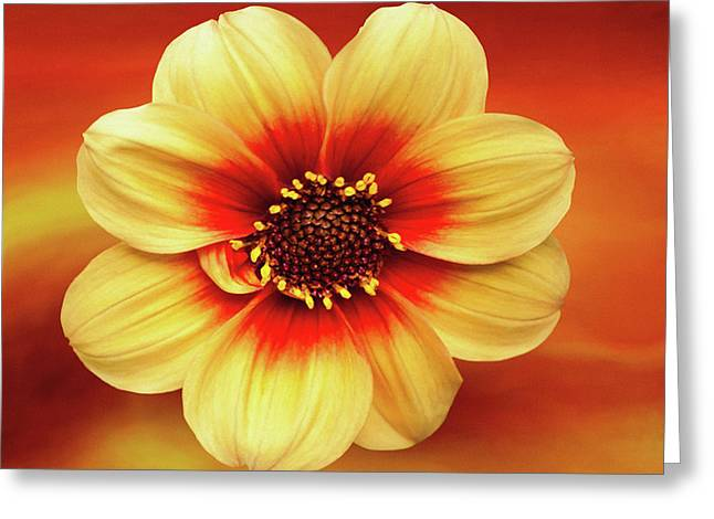 Red And Yellow Inspiration Greeting Card