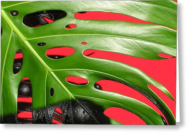 red ang green N1 Greeting Card by Evguenia Men