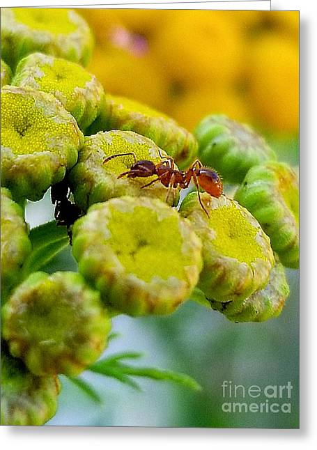 Red Ant Greeting Card