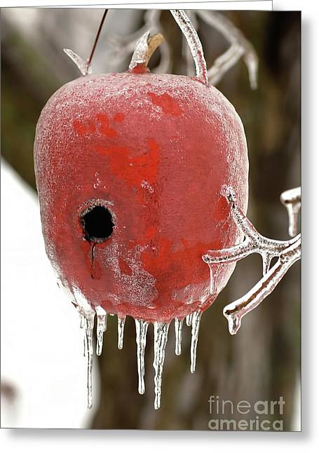 Greeting Card featuring the photograph Red Apple Birdhouse by Michael Flood