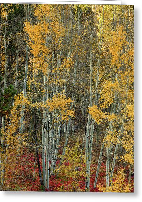 Red Aspen Forest Wilderness Floor Greeting Card