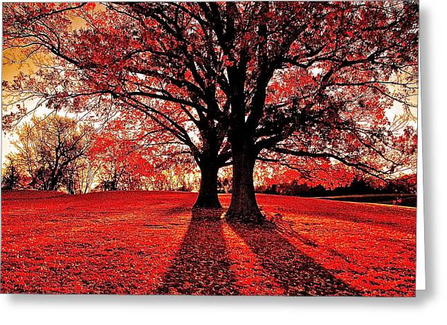 Red Autumn Greeting Card by E Robert Dee