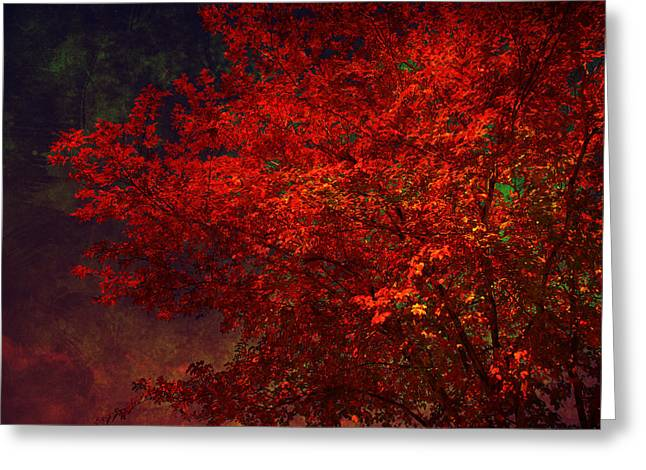 Red Autumn Tree Greeting Card by Susanne Van Hulst