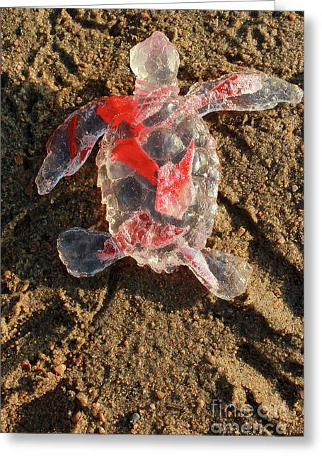 Red Baby Sea Turtle From The Feral Plastic Series By Adam Long S Greeting Card
