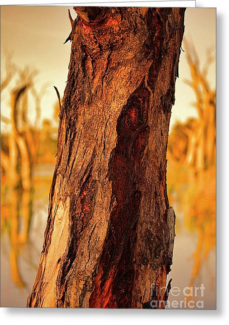 Greeting Card featuring the photograph Red Bark by Douglas Barnard