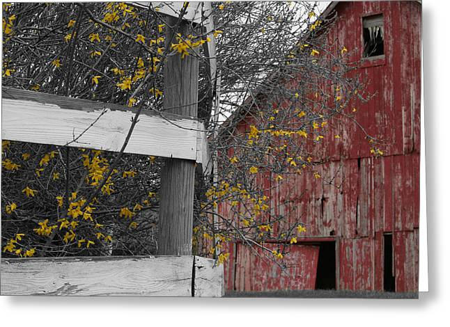 Red Barn And Forsythia Greeting Card