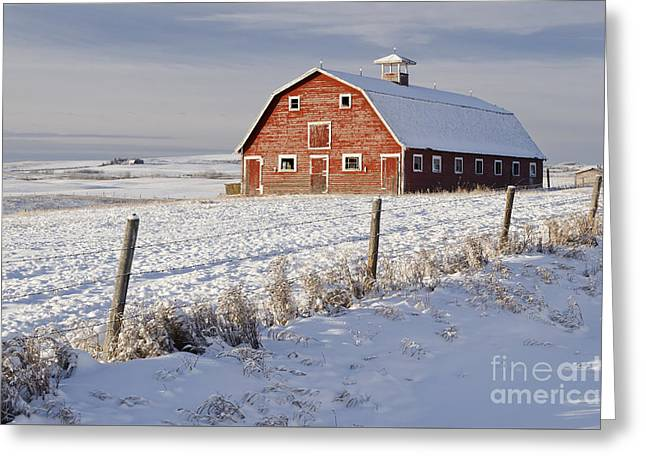 Red Barn In Winter Coat Greeting Card