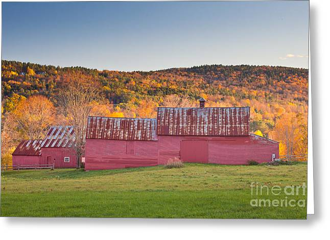 Red Barns Greeting Card by Susan Cole Kelly