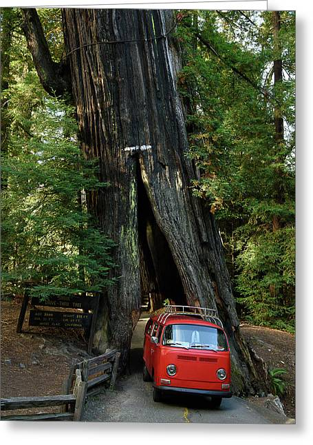 Red Bay Window Bus Drives Through A Tree Greeting Card