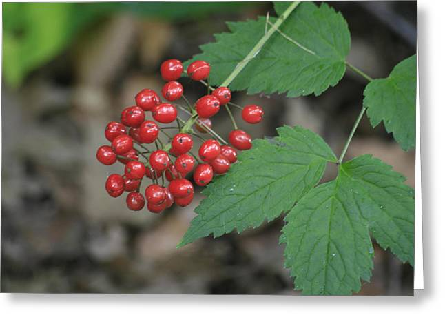 Red Bead Greeting Card by Alan Rutherford
