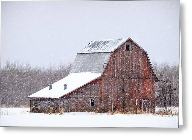 Red Beauty In Snow Greeting Card