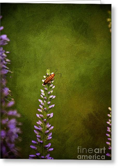 Red Beetle On Purple Blazing Star Greeting Card by Mary Machare