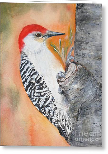 Red Bellied Male Woodpecker Greeting Card