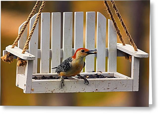 Red Bellied On Swing - 5 Greeting Card