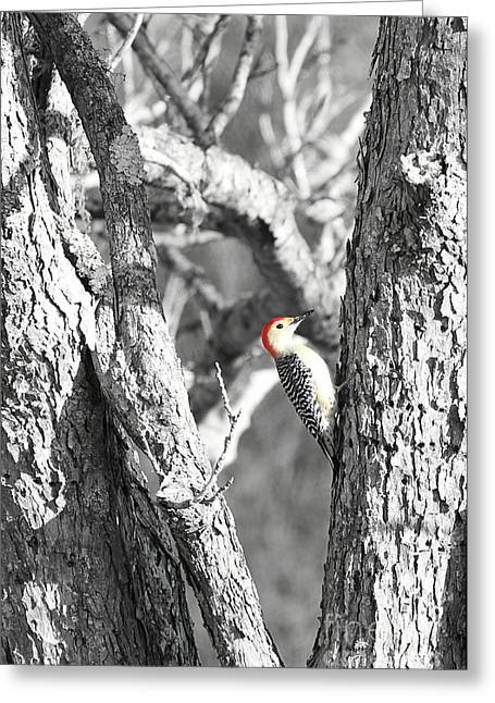 Greeting Card featuring the photograph Red-bellied Woodpecker by Benanne Stiens