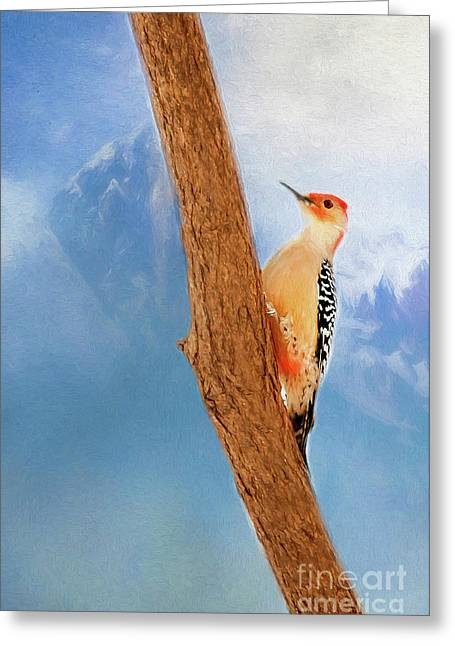 Red Bellied Woodpecker Greeting Card by Darren Fisher