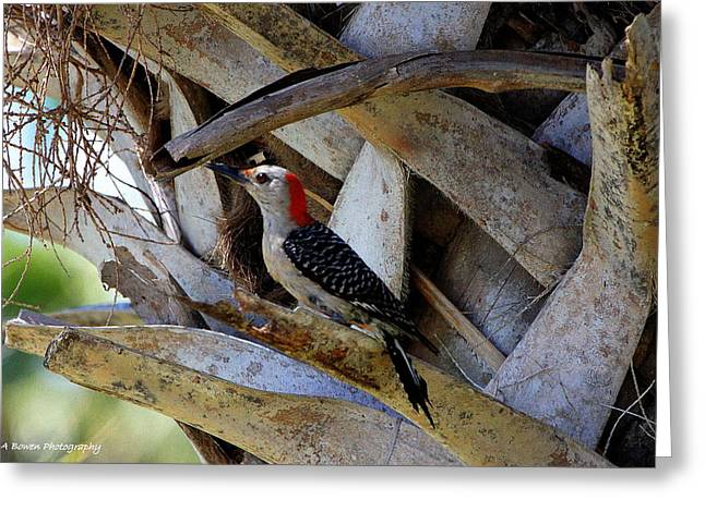 Red-bellied Woodpecker Hides On A Cabbage Palm Greeting Card by Barbara Bowen