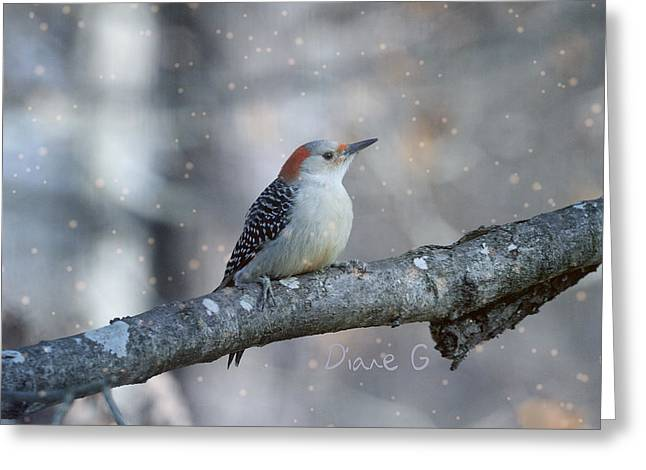Red-bellied Woodpecker In Snow Greeting Card
