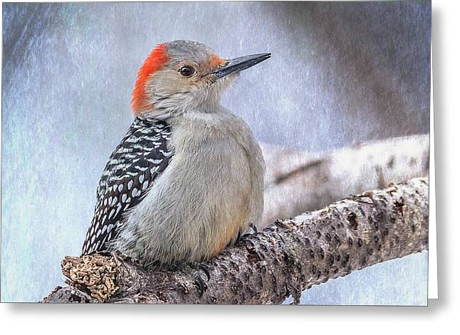 Red-bellied Woodpecker Greeting Card by Patti Deters