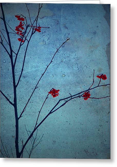 Red Berries Blue Sky Greeting Card by Tara Turner