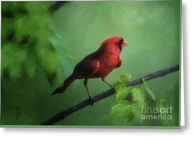 Red Bird On A Hot Day Greeting Card by Lois Bryan