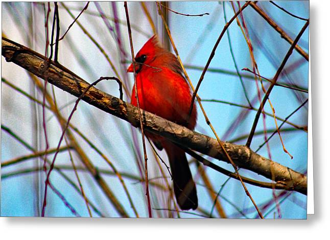 Red Bird Sitting Patiently Greeting Card