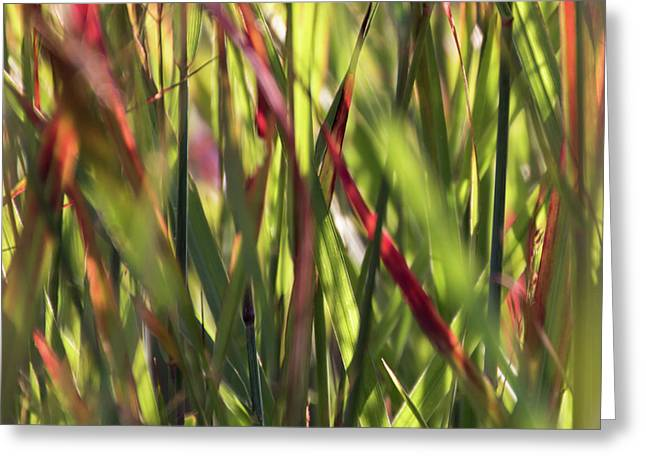 Red Blades Among The Green Greeting Card