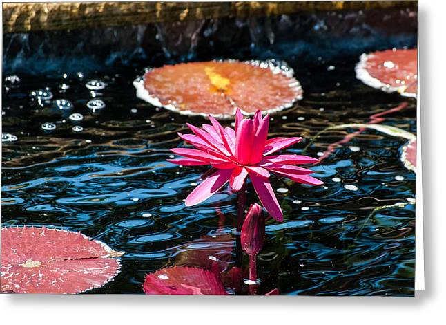 Red Blossom Water Lily Greeting Card