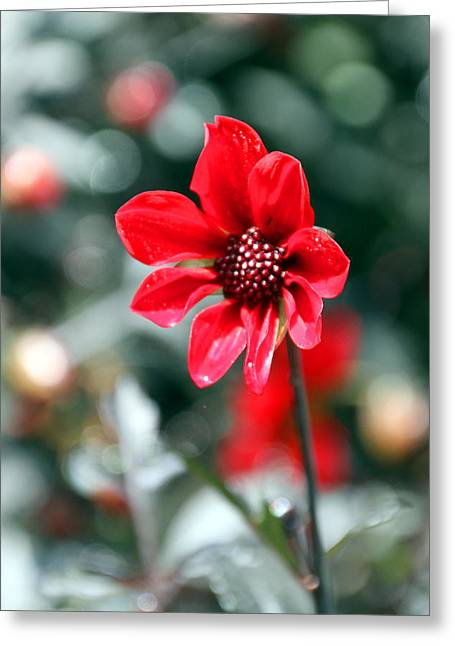 Red Bokeh2 Greeting Card by Carolyn Stagger Cokley