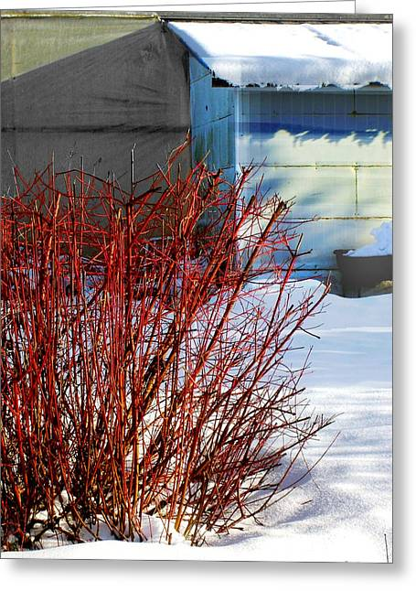 Red Branches And Snow Greeting Card by Barbara  White