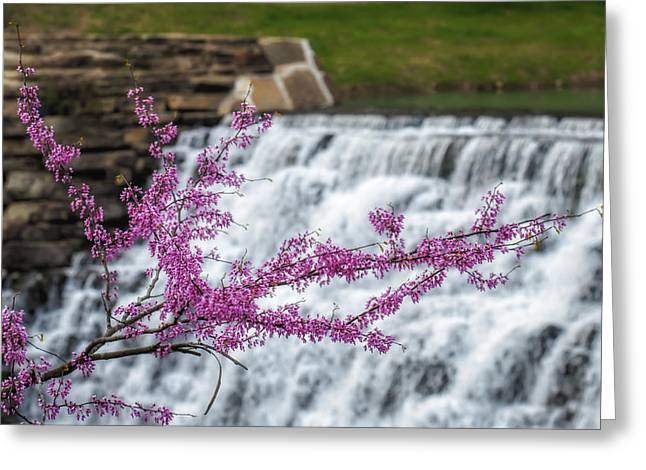 Redbud At Devils Den Greeting Card