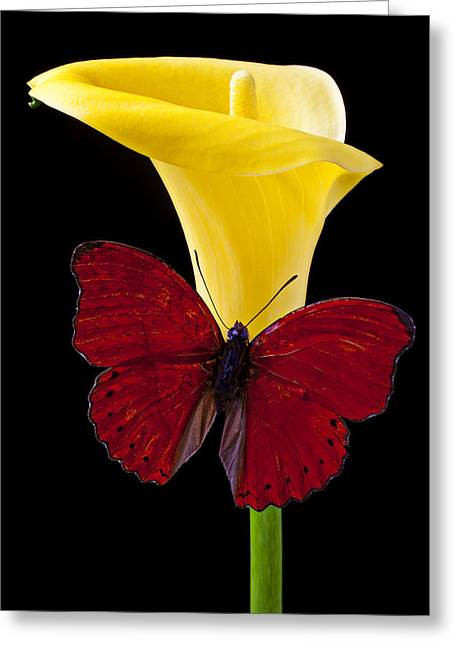 Red Butterfly And Calla Lily Greeting Card by Garry Gay