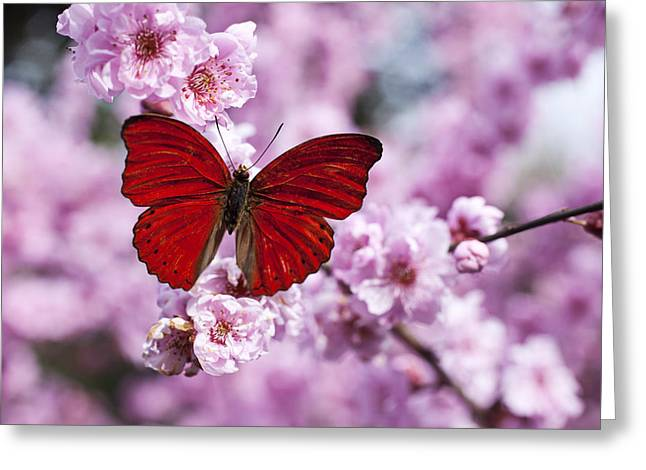 Plum Blossoms Greeting Cards - Red butterfly on plum  blossom branch Greeting Card by Garry Gay