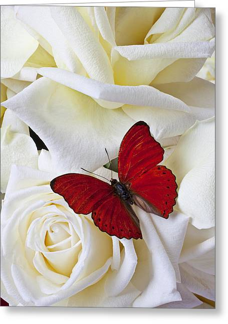 Flower Arrangements Greeting Cards - Red butterfly on white roses Greeting Card by Garry Gay