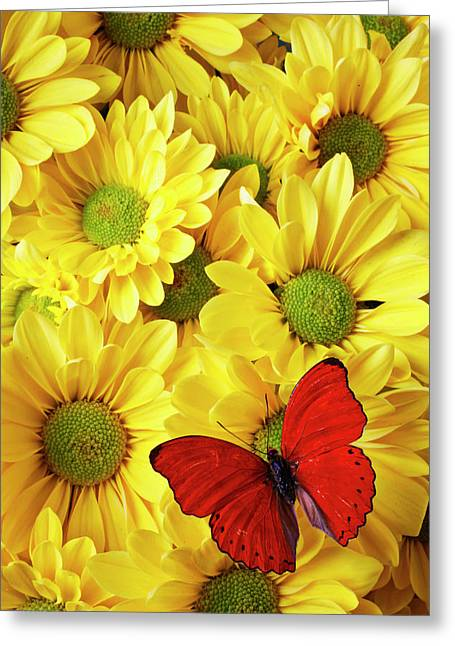 Red Bouquet Greeting Cards - Red butterfly on yellow mums Greeting Card by Garry Gay