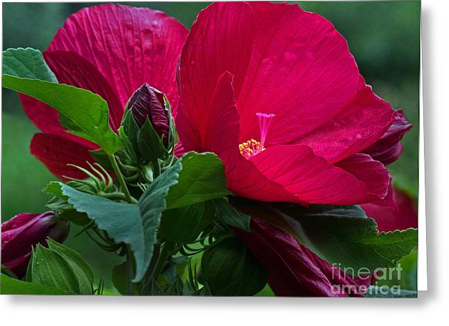 Red By The Pond Greeting Card by Robert Pilkington