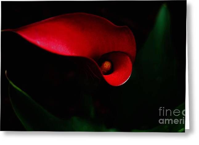 Greeting Card featuring the painting Red Calla Lilly by Debra Crank