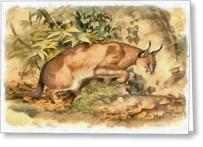 Red Caracal Greeting Card by Sergey Lukashin