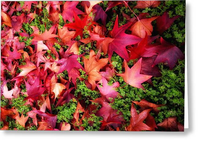 Red Carpet Greeting Card by Donna Blackhall