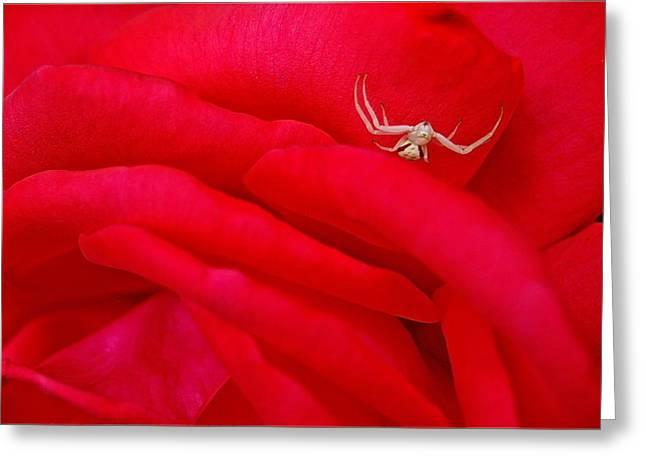 Red Carpet Greeting Card by Mark Lemon