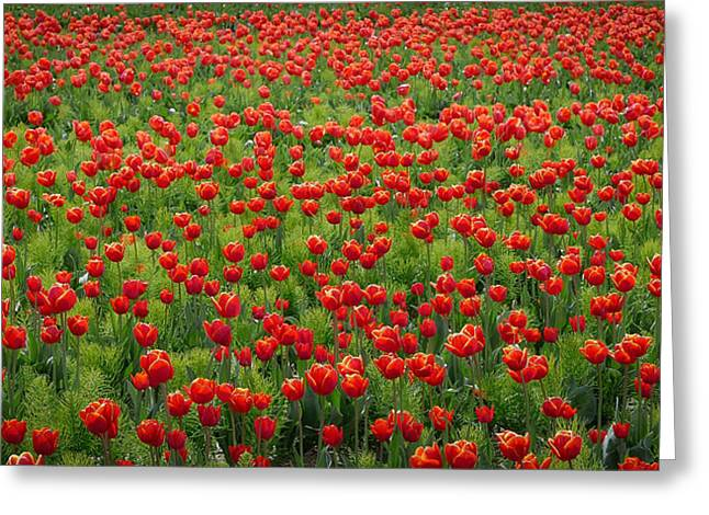 Greeting Card featuring the photograph Red Carpet by Tom Vaughan
