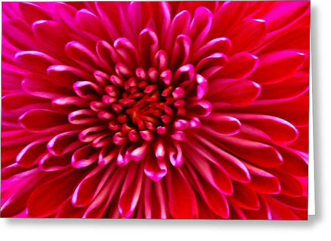 Red Chrysanthemum Greeting Card