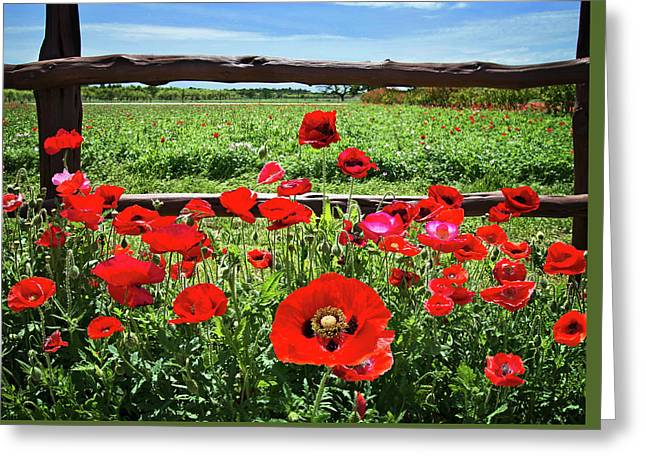 Red Corn Poppies At The Fence Greeting Card by Lynn Bauer