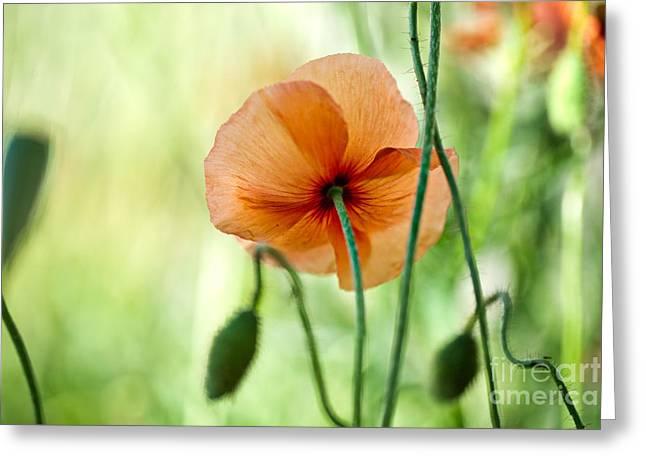 Red Corn Poppy Flowers 02 Greeting Card by Nailia Schwarz